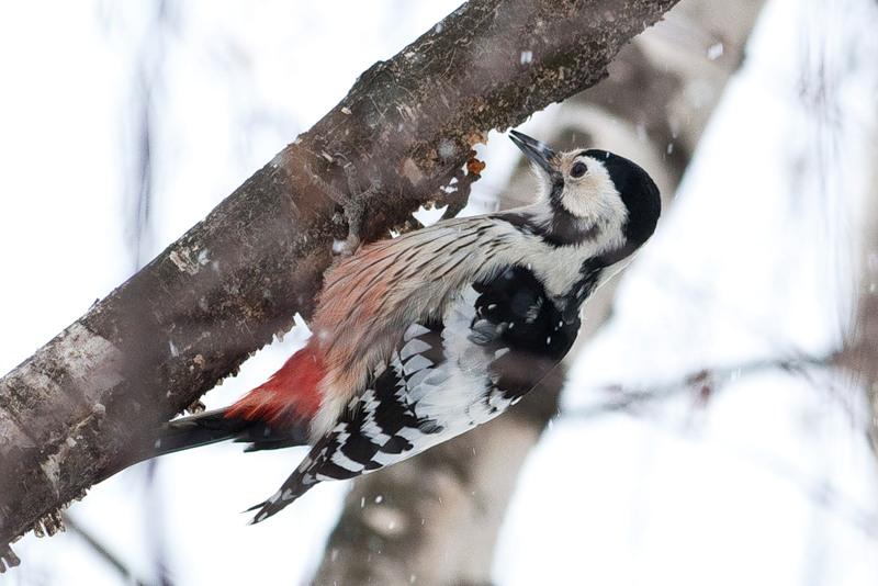 Рассказы о зиме и животных зимой